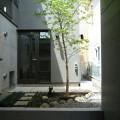 イロハモミジのある中庭